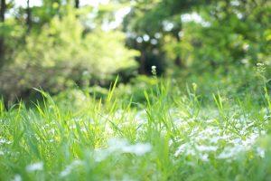 近所で見つけた春の七草