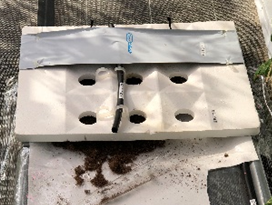 アイメック栽培の道具