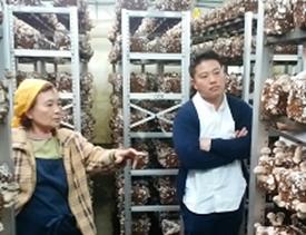 菌床しいたけを見ている男性と女性。