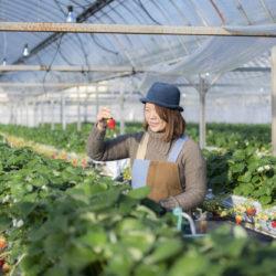 いちご農家の「勝占いちご」とこだわりジェラート/いちご農家 西岡産業